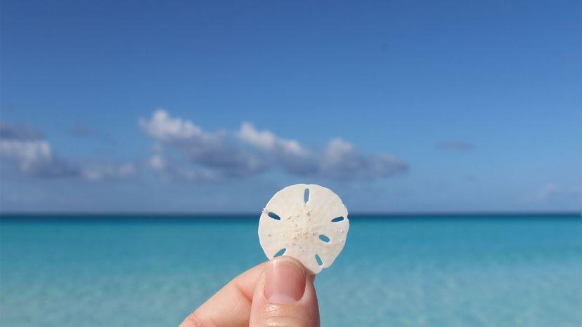 sand dollar, beach
