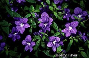 See more pictures of annual flowers.