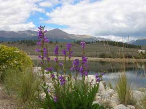 The last blossoms of wildflowers flourish before yielding to the timberline and the majestic peaks of the Rockies.
