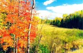 Fall is an excellent time to drive the Edge of the Wilderness. The birch trees put on a splendid show.