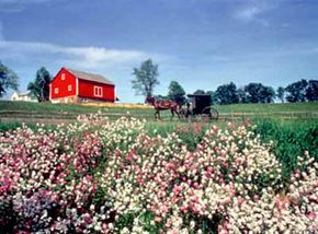 An Amish horse and buggy travels down a peaceful stretch of Amish Country Byway.