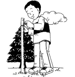 ©2007 Publications International, Ltd.                              Find the height of a tree by estimating.