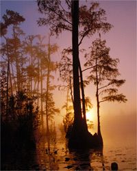 An ethereal moment at the Okefenokee National Wildlife Refuge, Georgia