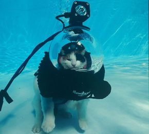 """From the Scuba Cat photo essay: """"World, Just Leave Me Alone."""""""