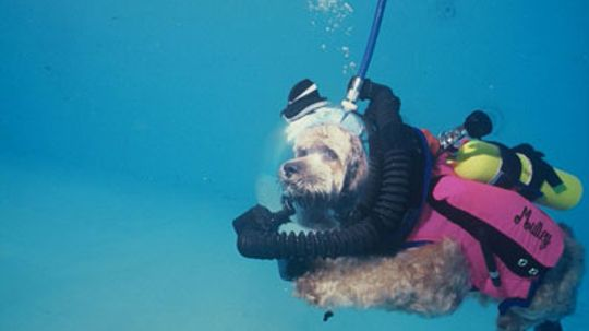 How could a cat scuba dive?
