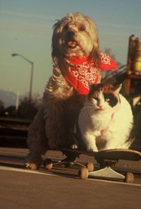 Mutley and Hawkeye set out to surf the asphalt waves of Redding, Calif.