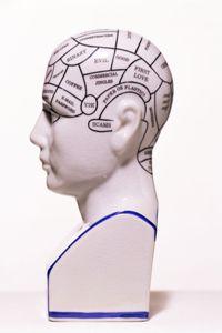 Model of the human head