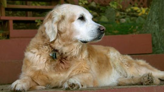 What ingredients are important in senior dog food?