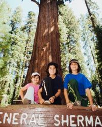 No trip to Sequoia would be complete without visiting the General Sherman Tree, the world's largest living tree at 275 feet (84 meters).