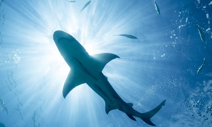 Shark Magnet Stephen Frink/Oxford Scientific/Getty Images