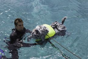 "Tory Bellici, of Discovery Channel's ""MythBusters,"" assists RoboDog, the robotic dog used on the show to test whether sharks like to eat dogs."