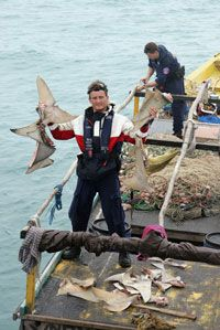 An Australian customs officer displays drying shark fins found on board a suspected illegal fishing boat near Darwin, Australia. See more shark pictures.