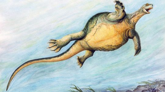 Prehistoric Turtle Had a Toothless Beak But No Shell