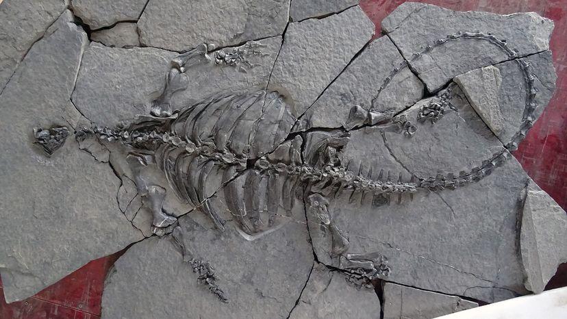 Eorhynchochelys sinensis