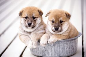 To be a responsible shopper, buying from a reputable pet dealer is essential. Not all online sources are what they claim to be, and that's especially true in the world of pets.
