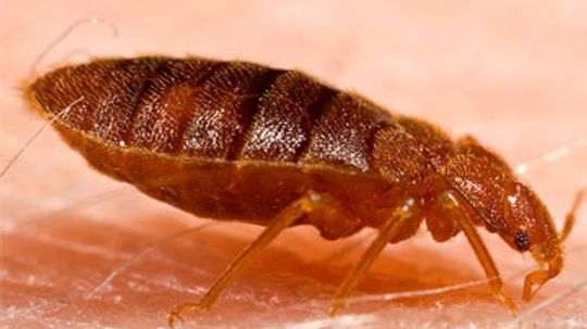 5 Common Skin Parasites