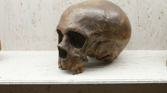 Interbreeding with Neanderthals Gave Humans Virus Protections