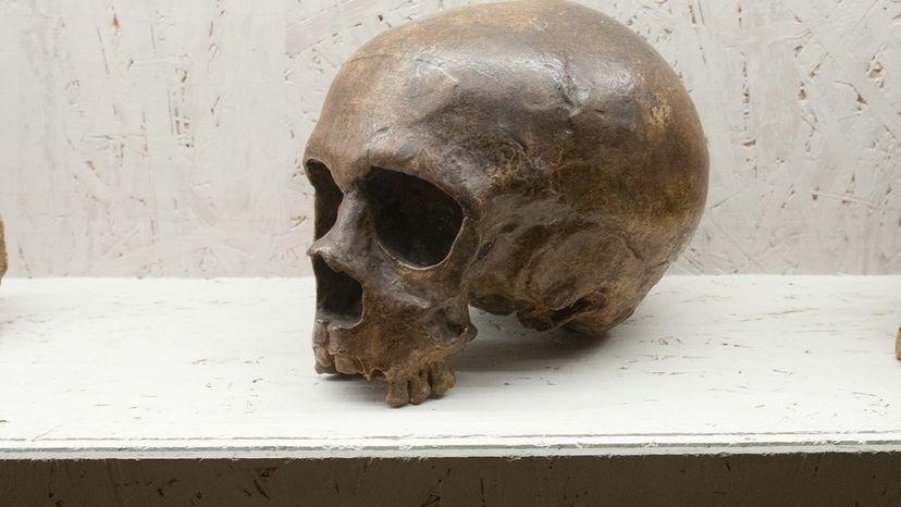 Neanderthal, DNA