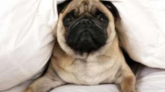 How to Help Puppies Sleep