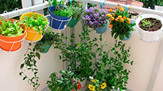 Green Living Solutions for Small Budgets