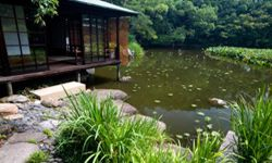Japanese water gardens provide perfect spaces for reflection and peace.