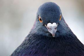 """Who are you calling birdbrain?"""