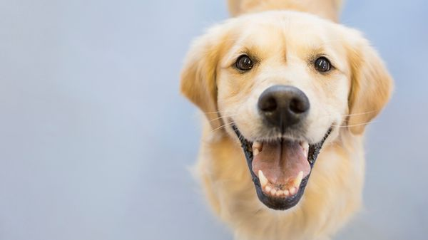 How Did 'Fido' Become the Default Name for a Dog?