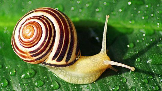 How Do Snails Get Their Shells?