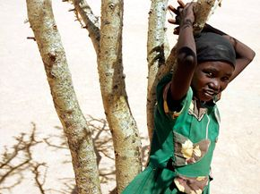 A Sudanese refugee in the Iridimi camp stands by a craggy tree. The dearth of firewood at camp drives women and girls into the bush to find fuel.