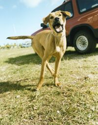 A dog's barking can be added in post production.