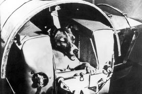 The Soviets launched Laika the dog into space, but weren't truthful about how the mutt died on her fateful mission.