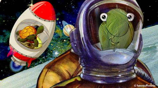 """两只俄罗斯太空龟击败阿波罗登上月球的时间""""border="""