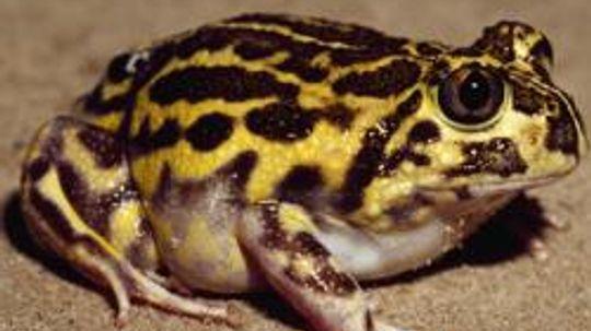 Amphibian Pictures