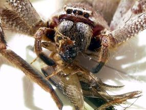 It is estimated that up to 1 million spiders live in one acre of land--in the tropics, that the number might be closer to 3 million.