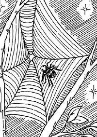 Spiderwebs photograph well.