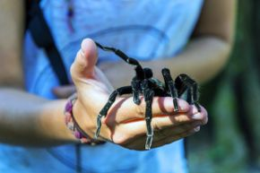 Spiders get a lot of flack, but much of that is due to a complete and utter misunderstanding of our hairy, eight-legged counterparts.