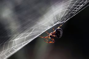 Spiders are known for their webs, but not all of the little guys are gifted web 'designers.'