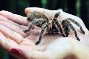 Yes, spiders inhabit most areas of the world — but one isn't always just a few feet away.