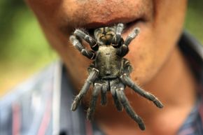 Just because people eat fried spiders in Cambodia doesn't mean you want them sneaking into your mouth while you slumber.