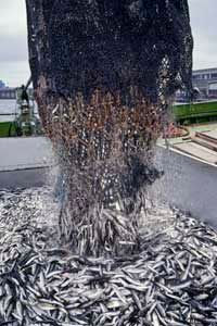 A study published in the journal Science estimated that one-third of global fisheries are in a state of collapse.