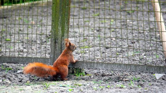 It's Gardening Season: 5 Tips to Keep Squirrels Out