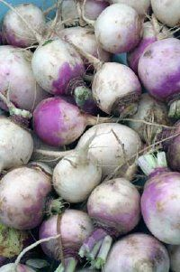 Turnips are 2 to 4 inches wide when ripe.