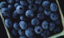Berries support brain function.
