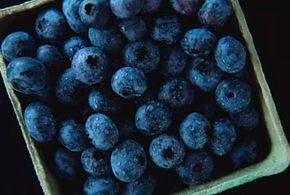Freshly picked blueberries have a silvery film called bloom. See more pictures of fruit.