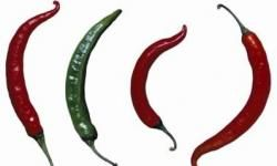 Chili peppers vary in size and spiciness and won't help your hiccups.