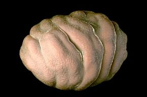 Tardigrades are comfortable hanging out for quite a while in their tun state.