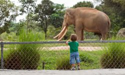 Many zoos have programs that focus on sustainable living, too.