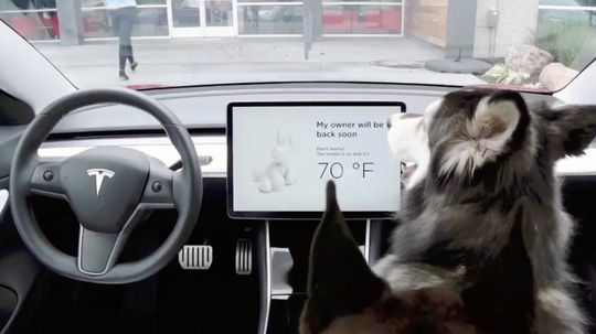 Tesla Dog Mode Keeps Pets Cool in Locked Cars