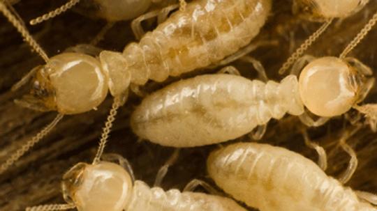 Termite Foundation Damage