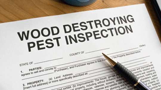 Buying a Home With Termite Damage